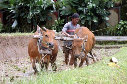 Bali 2013 226_1024