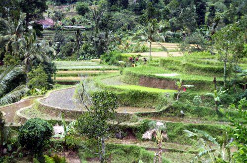 Bali 2013 234_1024