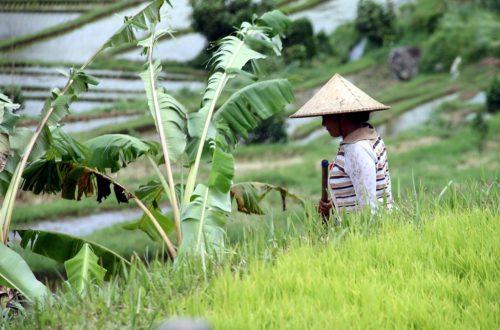 Bali 2013 264_1024