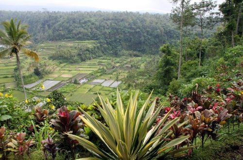 Bali 2013 735_1024